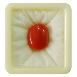 Astrological Coral Fine 19+ 11.8ct