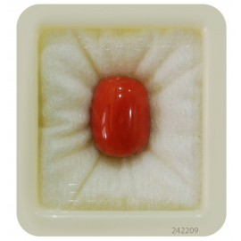 Coral Gemstone Std 11.4 CT (19 Ratti)