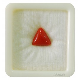 Astrological Coral Fine 4+ 2.6ct
