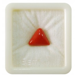 Certified Red Coral Premium 6+ 3.9ct