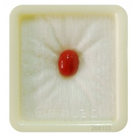Astrological Coral Fine 3+ 1.8ct