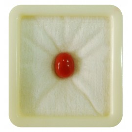 Astrological Coral Fine 4+ 2.4ct