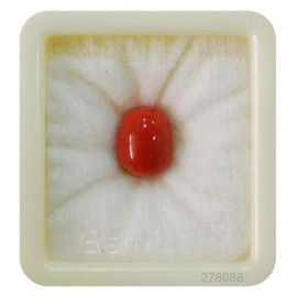 Certified Red Coral Premium 7+ 4.6ct