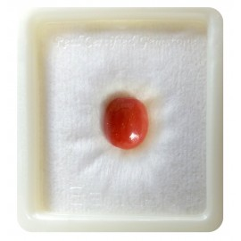 Certified Red Coral Premium 5+ 3.1ct