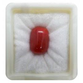 Astrological Coral Fine 22+ 13.25ct
