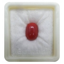 Certified Red Coral Premium 10+ 6.2ct