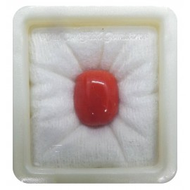 Certified Red Coral Premium 19+ 11.5ct